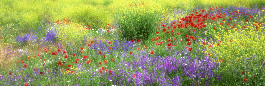 wildflowers-061