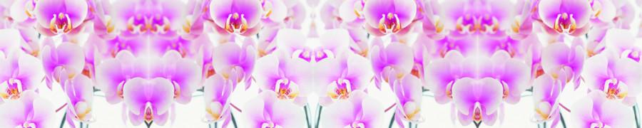 orchids-024