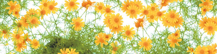 wildflowers-062