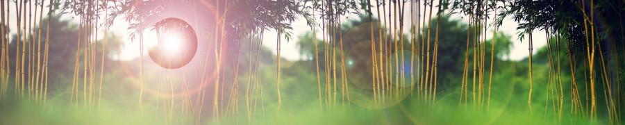 bamboo-plants-128