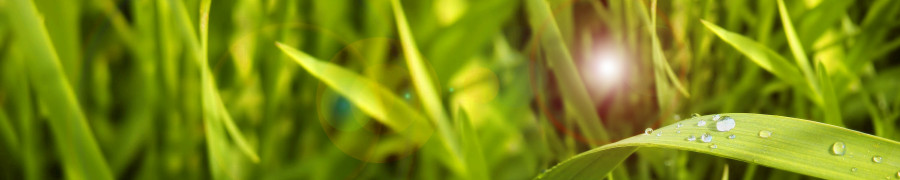 bamboo-plants-008