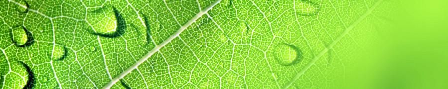 bamboo-plants-072