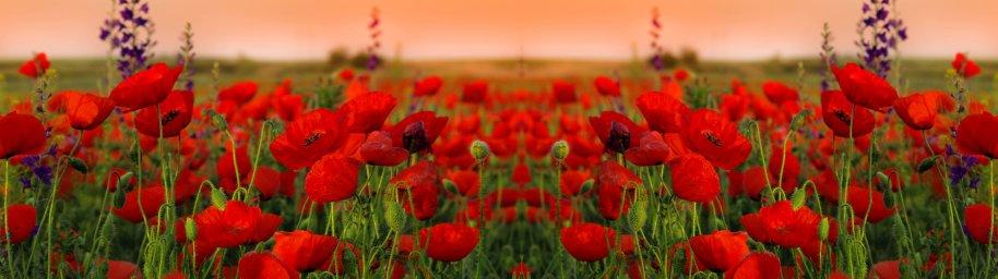 wildflowers-086