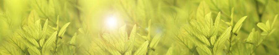 bamboo-plants-146