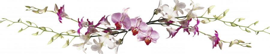 orchids-089