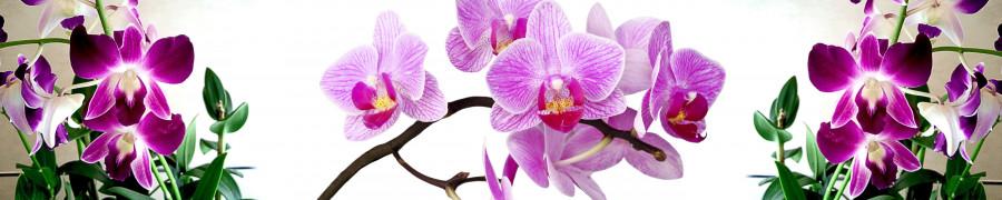 orchids-020