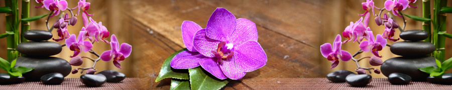 orchids-058