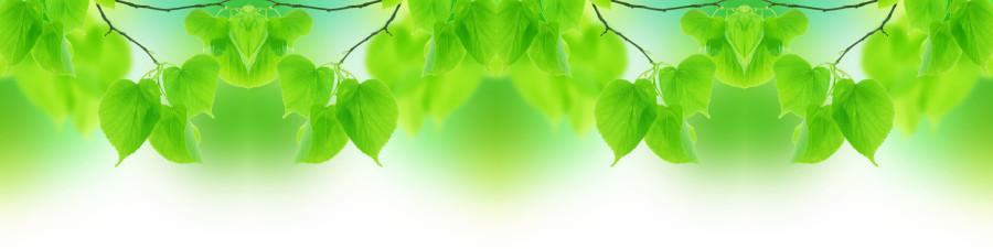 bamboo-plants-126