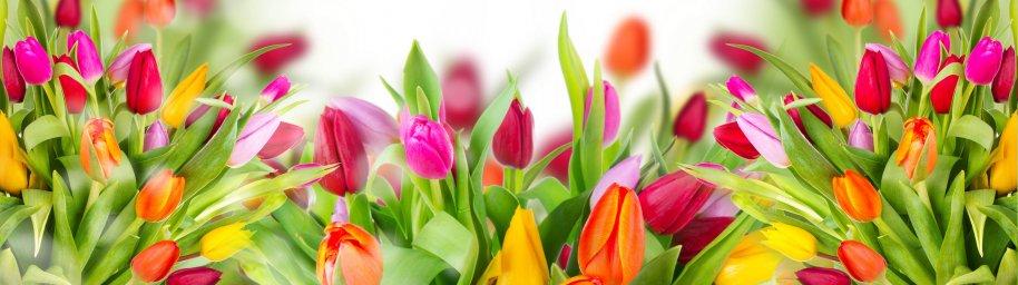 tulips-001