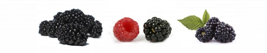 fruit-163
