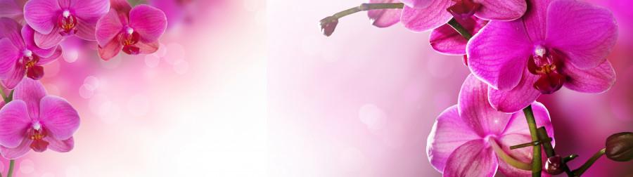 orchids-009