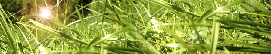 bamboo-plants-145