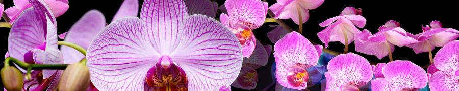 orchids-075