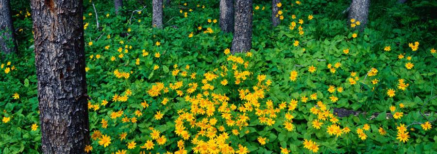 wildflowers-069