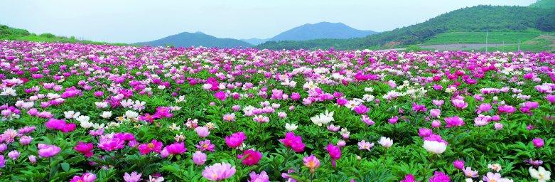 wildflowers-053