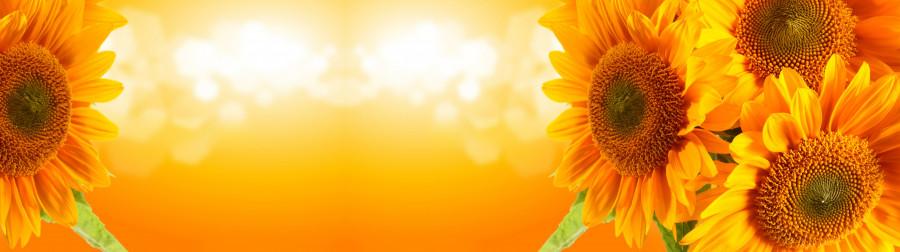 wildflowers-077
