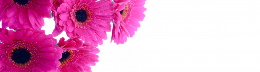 other-flower-055