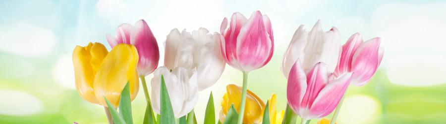 tulips-057