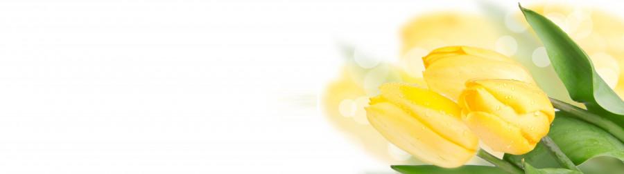 tulips-086