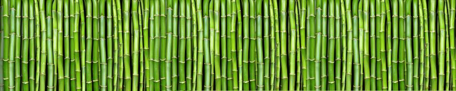 bamboo-plants-062