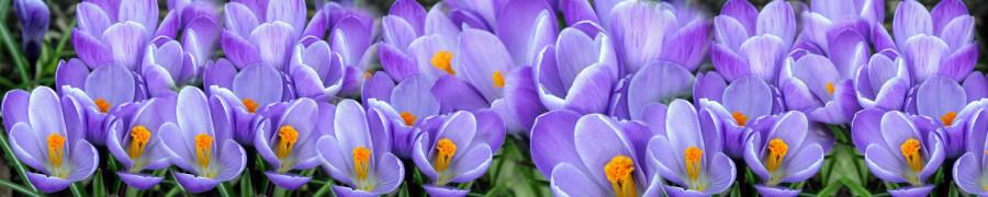wildflowers-035