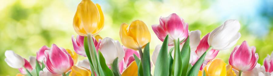 tulips-020