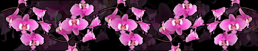 orchids-067