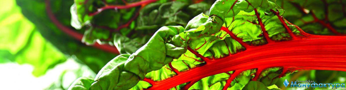vegetables-052
