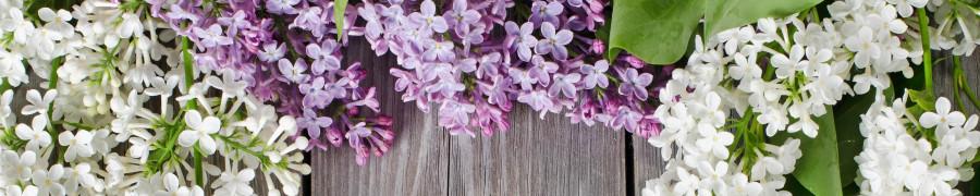 flowering-trees-078