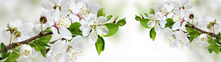 flowering-trees-038