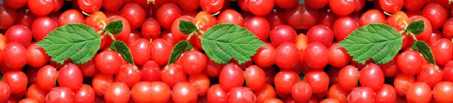 fruit-135