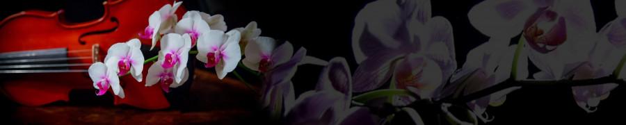 orchids-080