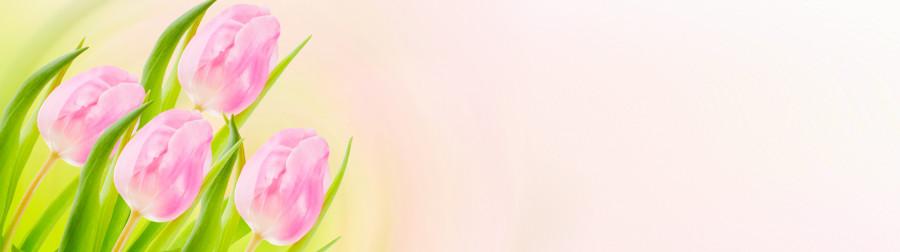 tulips-054