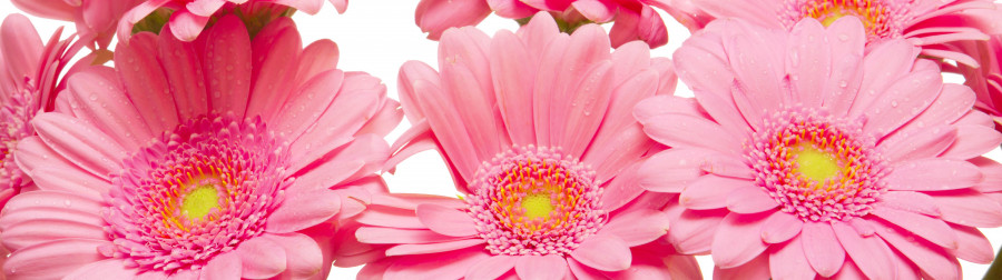 other-flower-027