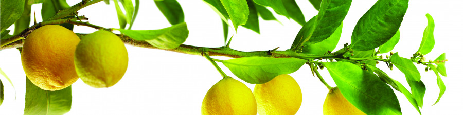 fruit-084