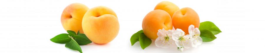 fruit-169