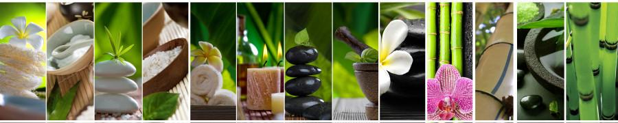 bamboo-plants-069
