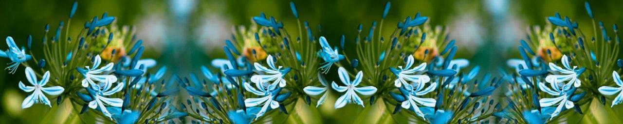 wildflowers-013