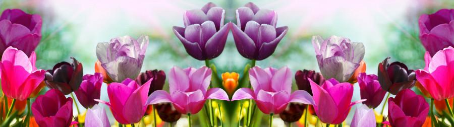 tulips-062