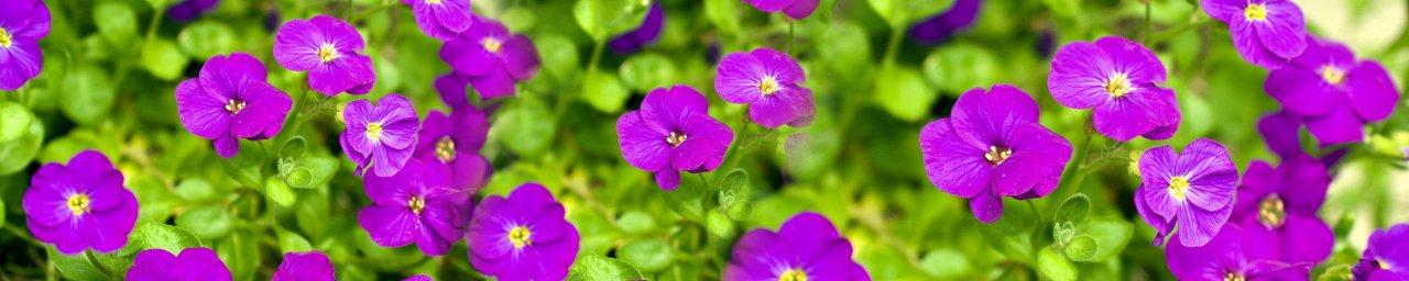 wildflowers-014