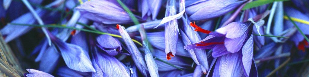 wildflowers-018