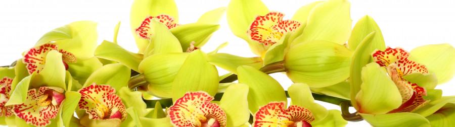 orchids-016