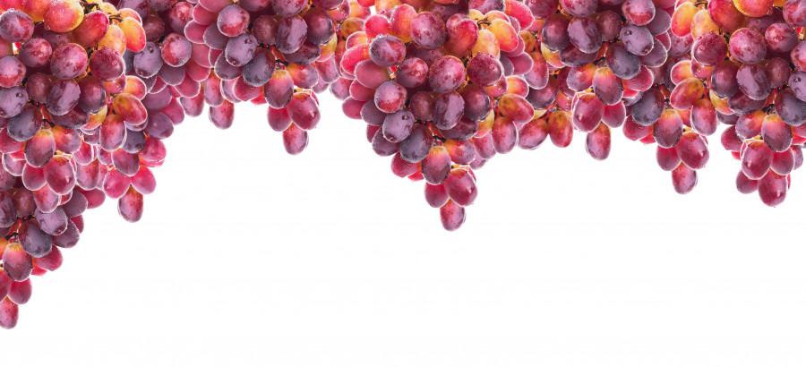 fruit-075