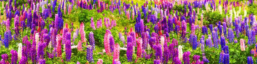 wildflowers-038
