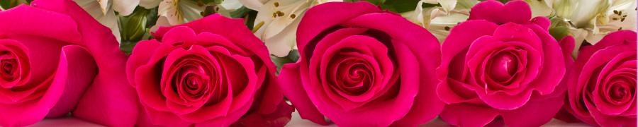 roses-019