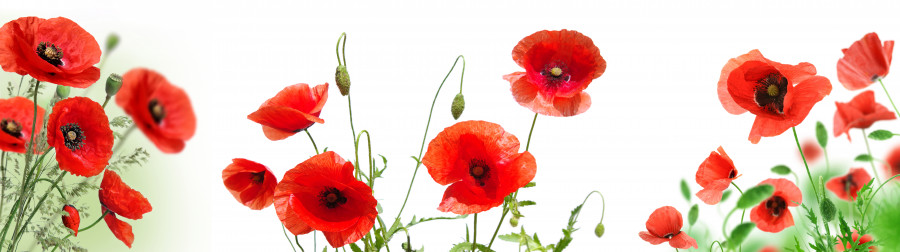 wildflowers-075