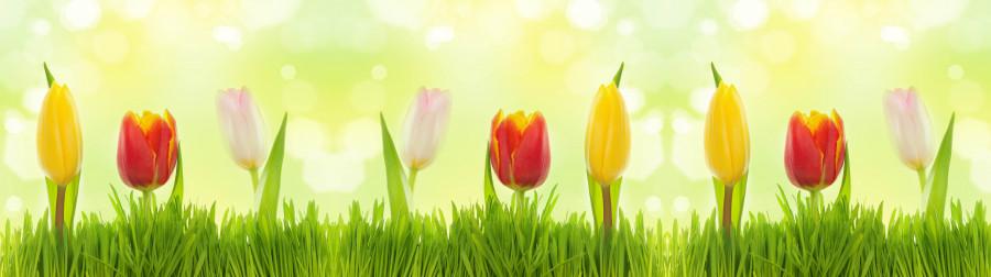 tulips-027