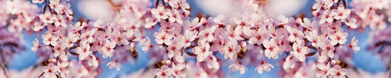 flowering-trees-042