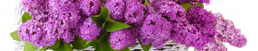flowering-trees-079