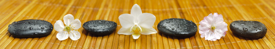 orchids-033